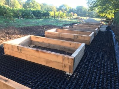 VINEYARD SETTING FOR RAILWAY SLEEPER BEDS