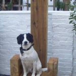 Dave the Dog creates Throne Masterpiece from Railway Sleepers