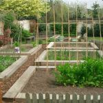 Amazing Raised Beds - Faster & better crops