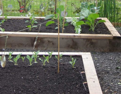 Robin Bletsoe's vegetable beds with railway sleepers
