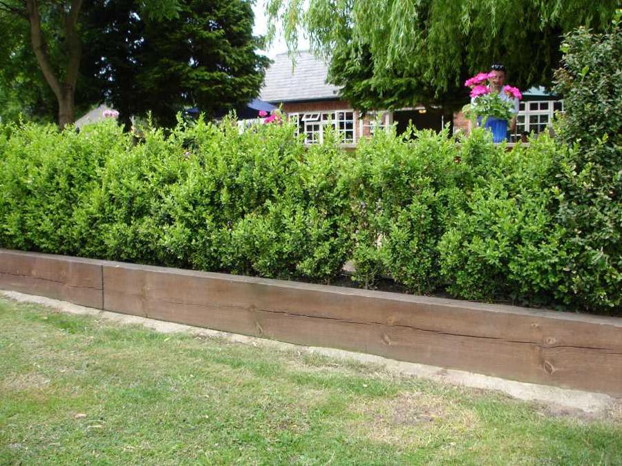 Bamboo Hedge Wall