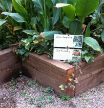 Butterfly farm's raised beds with new railway sleepers