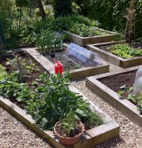 Raised vegetable beds - from new softwood railway sleepers