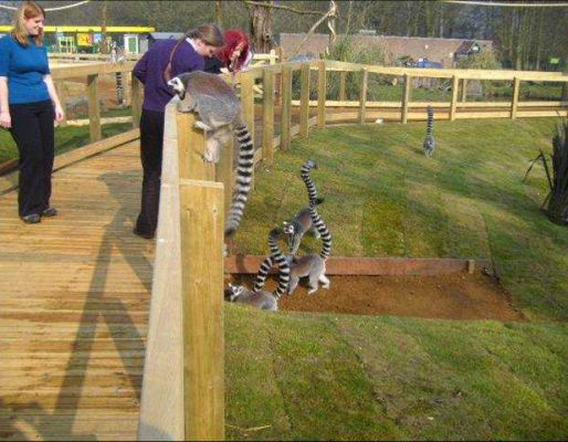 Whipsnade Zoo's lemur enclosure project